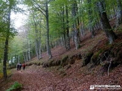 Yacimientos Atapuerca - Sierra de la Demanda; viajar solo grazalema camino